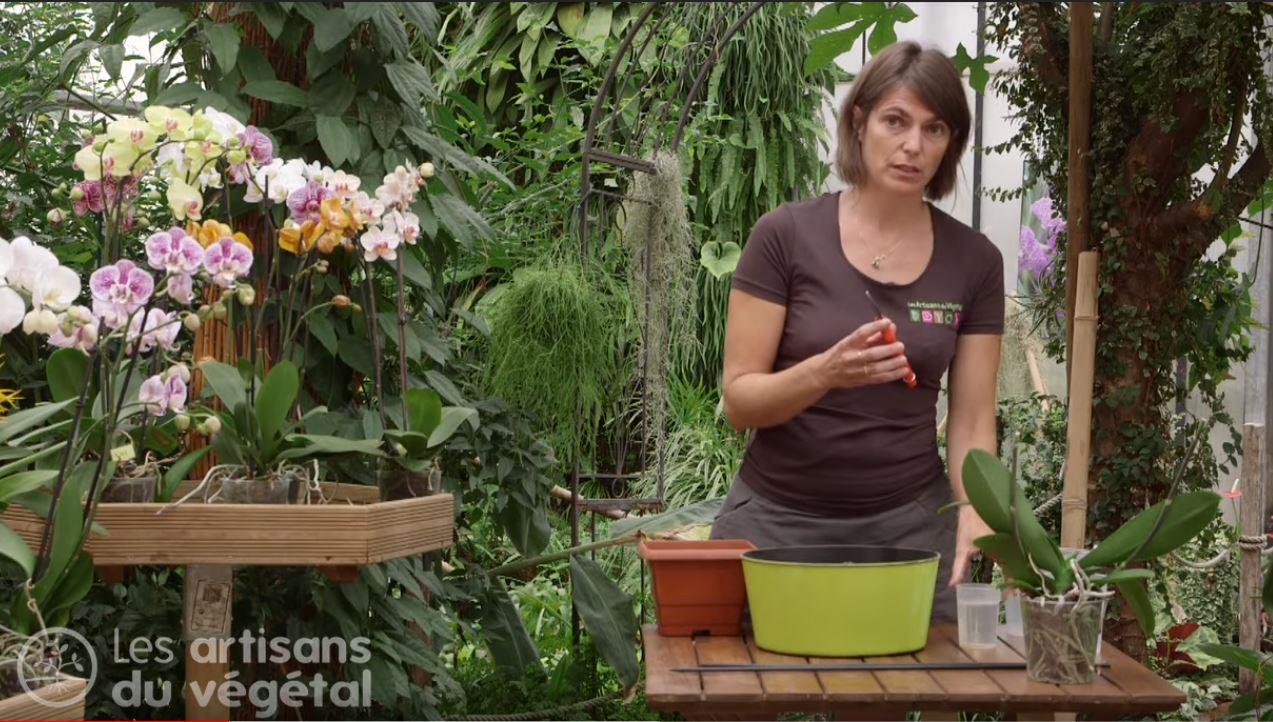 Comment Planter Une Orchidée comment planter, rempoter et arroser votre orchidée ? le